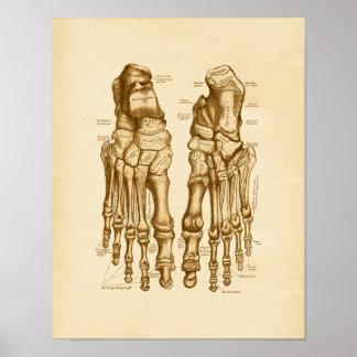 Huesos de pie del ejemplo de la anatomía del vinta impresiones