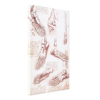 Huesos de pie esqueléticos de la anatomía humana impresión en lienzo