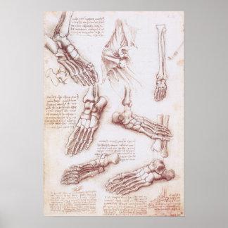 Huesos de pie esqueléticos de la anatomía humana póster