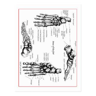 Huesos de pie postales