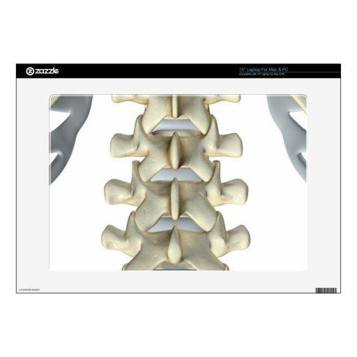 Huesos de vértebras lumbares skins para 38,1cm portátil