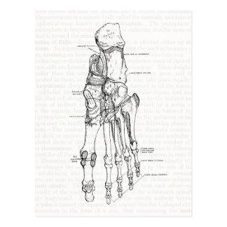 Huesos del arte de la anatomía del vintage del pie tarjetas postales