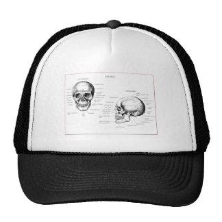 Huesos del cráneo humano gorra