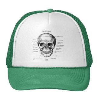 Huesos del cráneo humano gorro de camionero