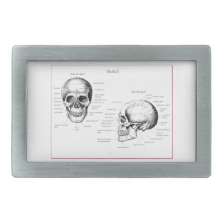 Huesos del cráneo humano hebillas de cinturon rectangulares
