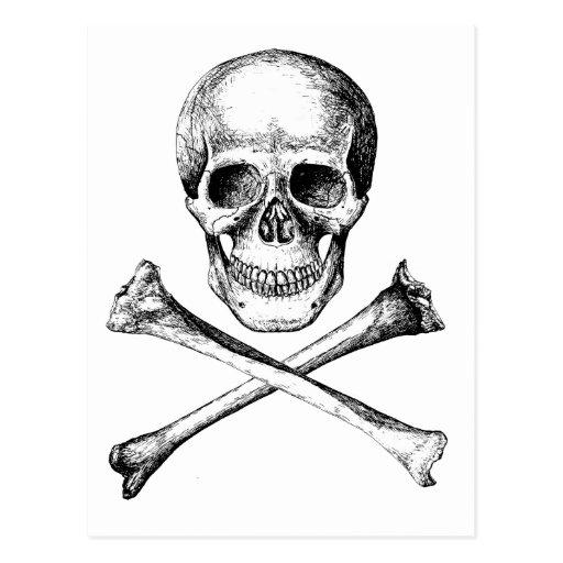 Huesos del cráneo y de la cruz - gris postal
