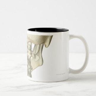 Huesos del cuello 4 taza de café