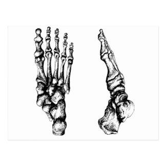 Huesos del foor. humano postal
