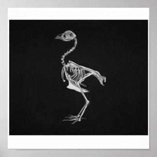 Huesos del pájaro póster