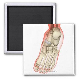 Huesos del pie 11 imán cuadrado