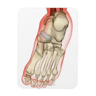 Huesos del pie 11 imanes de vinilo