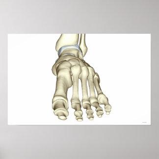Huesos del pie 11 poster