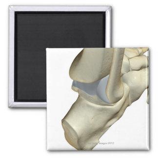 Huesos del pie 12 imán cuadrado