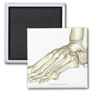 Huesos del pie 13 imán cuadrado
