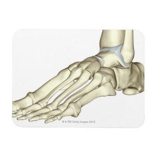 Huesos del pie 13 imán foto rectangular
