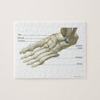 Huesos del pie 15 puzzle