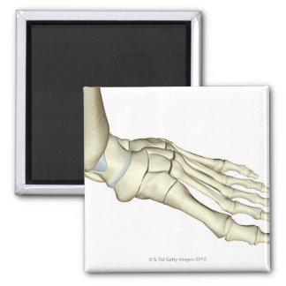 Huesos del pie 2 imán cuadrado