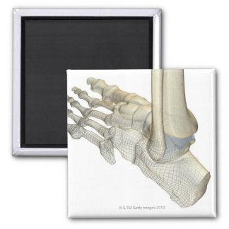 Huesos del pie 3 imán cuadrado