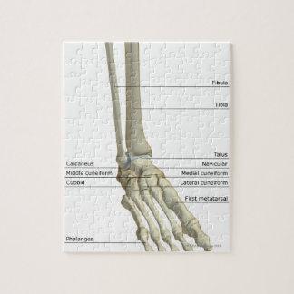 Huesos del pie 6 puzzle