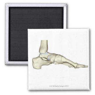 Huesos del pie 7 imán cuadrado