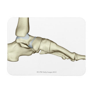 Huesos del pie 7 imanes de vinilo