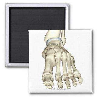 Huesos del pie 8 imán cuadrado