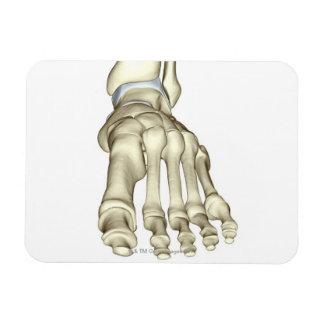Huesos del pie 8 imán foto rectangular