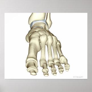 Huesos del pie 8 impresiones