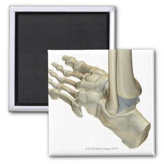Huesos del pie imán cuadrado