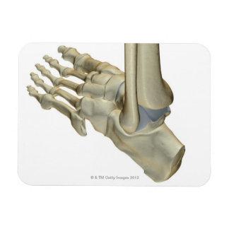 Huesos del pie iman de vinilo