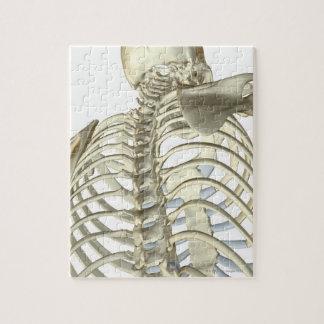 Huesos en el cuerpo superior rompecabeza con fotos