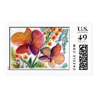 Huésped del negro del sello de la orquídea 31