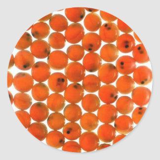 Huevo de color salmón pegatinas redondas