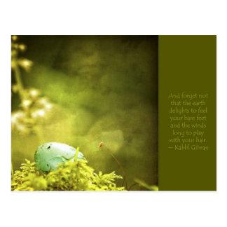 Huevo de los petirrojos en la foto del musgo con postales