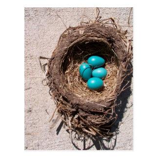 Huevos azules del petirrojo de la jerarquía del postal