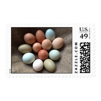Huevos clasificados frescos de la granja estampillas