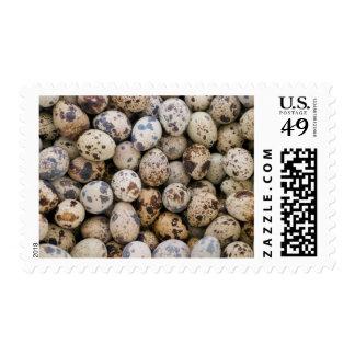 Huevos de codornices, Huaraz, Blanca de Franqueo