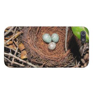 Huevos de los pájaros iPhone 5 carcasa