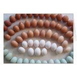 Huevos del arco iris para las gallinas raras de la felicitación