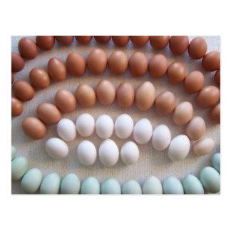 Huevos del arco iris para las gallinas raras de la tarjetas postales