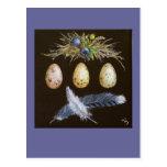 huevos del arrendajo azul con la postal de los ará