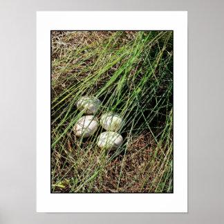 Huevos del cisne póster