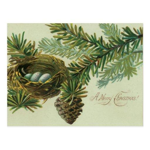 Huevos del pájaro de las Felices Navidad Postal