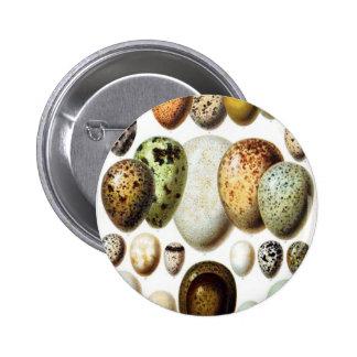 Huevos del pato pin
