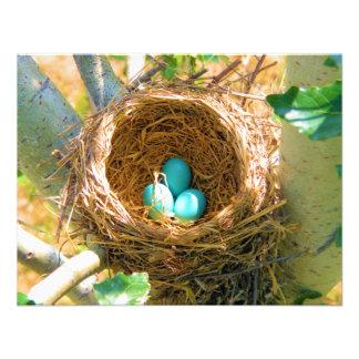 Huevos del petirrojo en una jerarquía del árbol de anuncio