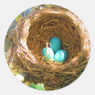 Huevos del petirrojo en una jerarquía del árbol de etiqueta redonda