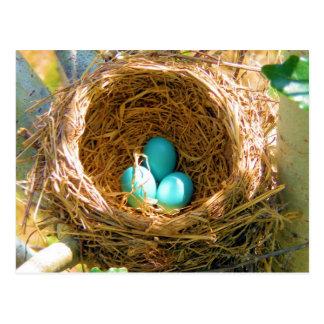 Huevos del petirrojo en una jerarquía del árbol de tarjetas postales