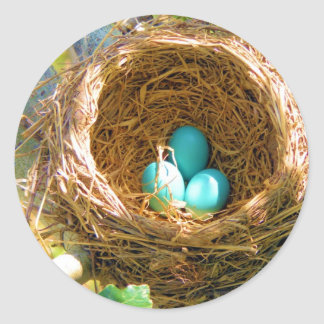 Huevos del petirrojo en una jerarquía del árbol pegatina redonda