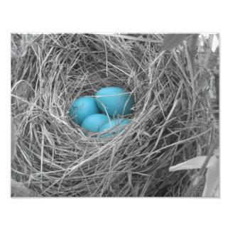 Huevos del petirrojo fotografias