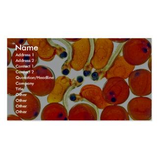 Huevos y fritada de color salmón plantilla de tarjeta de visita
